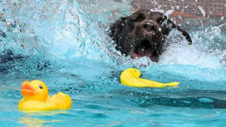 dog splash days, templeton, vineyard dog park. parks 4 pups