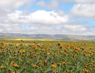 Go see the wildflowers in season