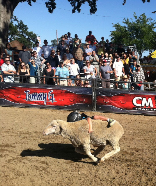 Mid-State Fair to showcase Mutton Bustin' Kids July 27