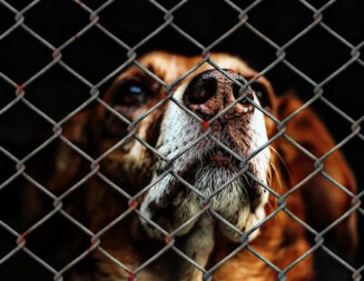 County, cities agree to build new $20 million regional animal services facility