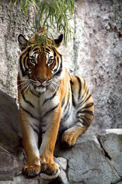 paddock zoo